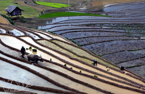 Terraced fields of Hoang Su Phi recognized as national heritage