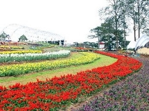 Planters in rush for Da Lat Flower Festival