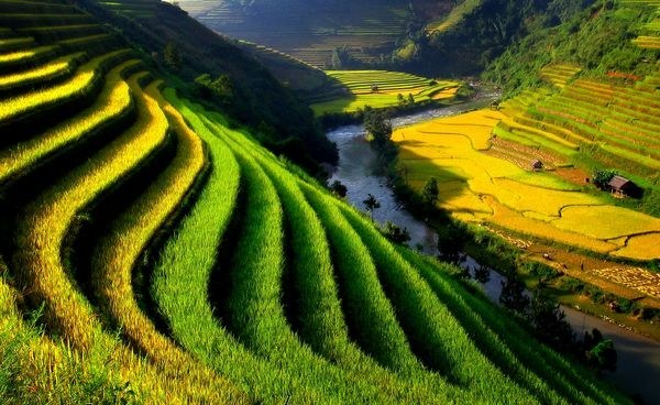 在越南北部梯田 (照片苴黎德 / 通过nationalgeographic.com)