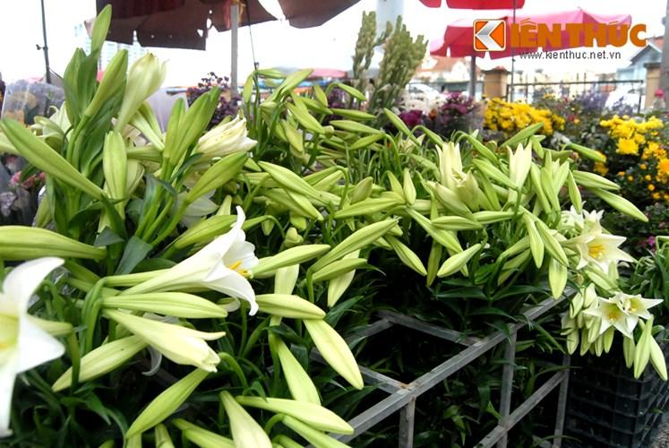 Weiße Lilien signalisieren Ankunft des Frühlings-5