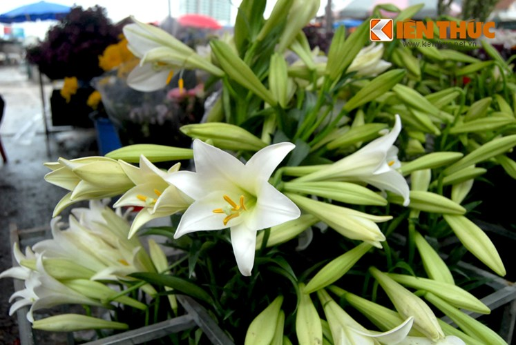 Weiße Lilien signalisieren Ankunft des Frühlings-6