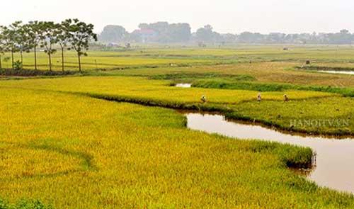 risaie alla periferia di hanoi vietnam blog