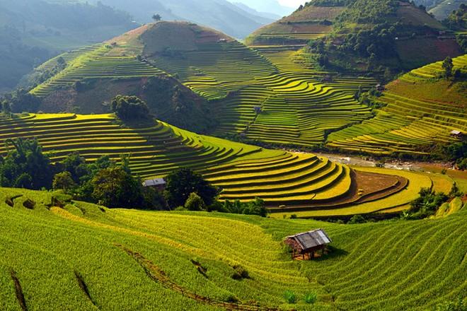 Mu Cang Chai terraced fields-04