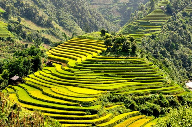 Mu Cang Chai terraced fields-06