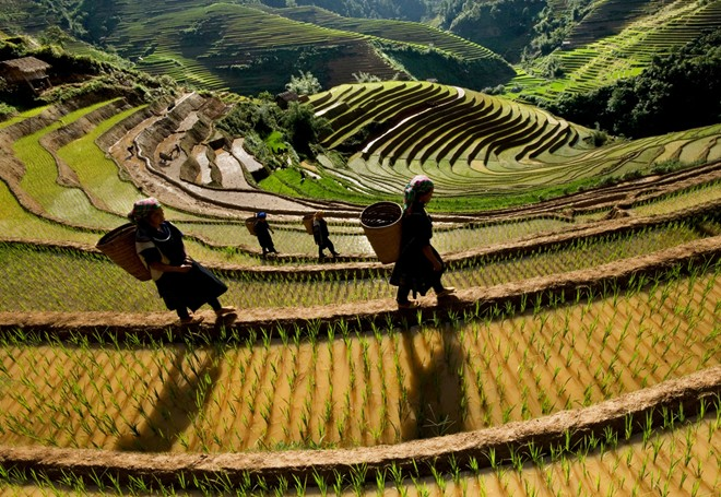 Mu Cang Chai terraced fields-07