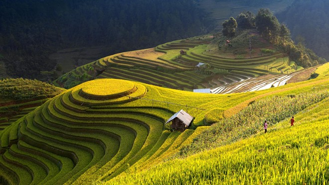 Mu Cang Chai terraced fields-09