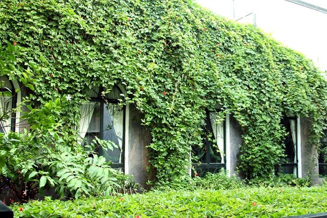 Green coffee shops in Saigon-05