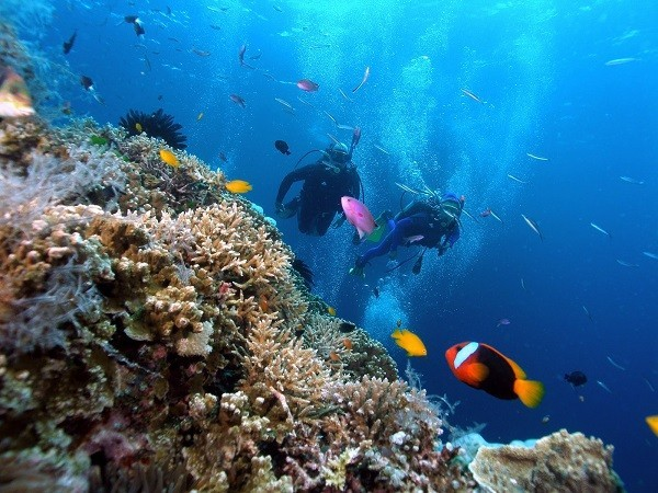 Dive in Phu Quoc