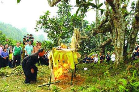 Worshipping the roots of sacred plant