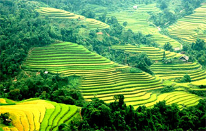 Bright prospects for Lao Cai tourism