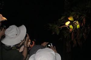 Night safari in Cat Tien