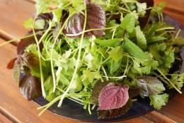 Herbs used in Vietnamese cuisine