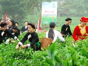 Festival to celebrate Vietnam's tea industry