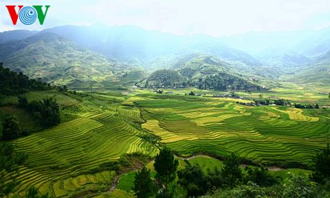 Terraced fields in Mu Cang Chai